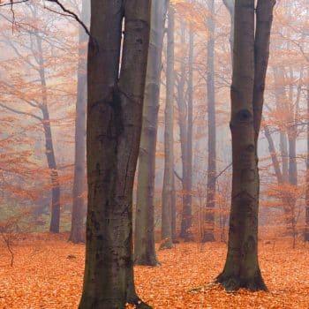 Bois Datchai 01 course en forêt 900x1200 - Maison Crivelli