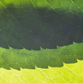 Fleur Diamantine 02 crumpled mint zoom texture leaves - Maison Crivelli