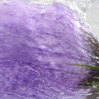 Fleur Diamantine 03 iced saffron crocus frozen flower - Maison Crivelli