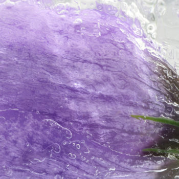Fleur Diamantine 03 safran glacé crocus glace gelé - Maison Crivelli