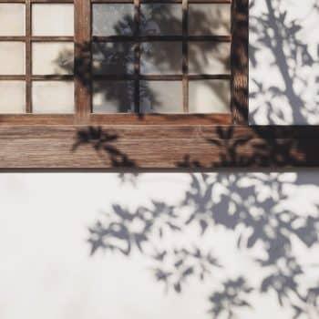 Fleur Diamantine 04 jardin garden shadow ombre - Maison Crivelli
