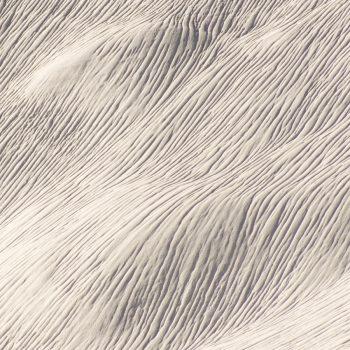 Fleur Diamantine 05 mellow almond texture creamy - Maison Crivelli