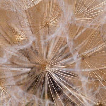 Fleur Diamantine 08 fluttering corollas flower - Maison Crivelli