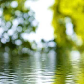 Fleur Diamantine 09 reflet fontaine - Maison Crivelli