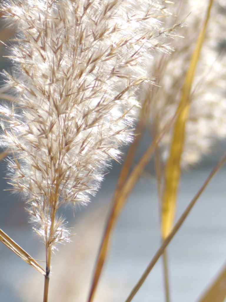 Papyrus Moléculaire 03 reeds roots 1200x900 - Maison Crivelli
