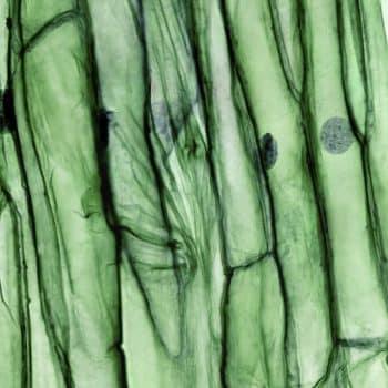 Papyrus Moléculaire 04 coriander boost 900x1200 - Maison Crivelli