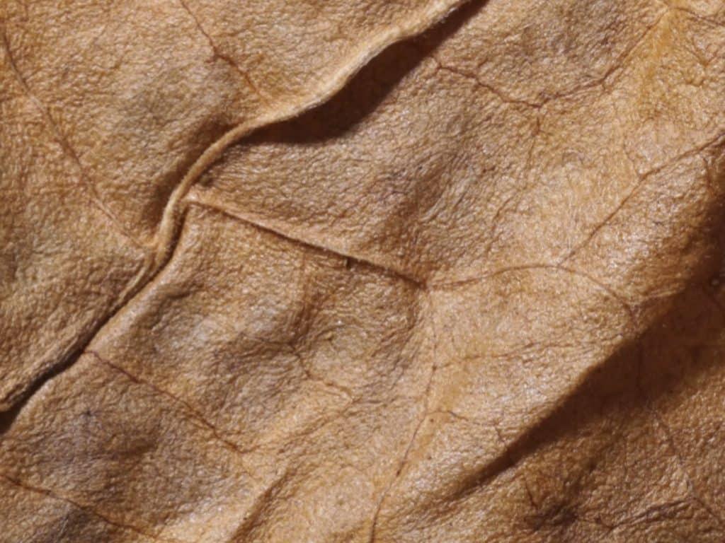 Papyrus Moléculaire 08 tobacco cigar zoom texture 900x1200 - Maison Crivelli