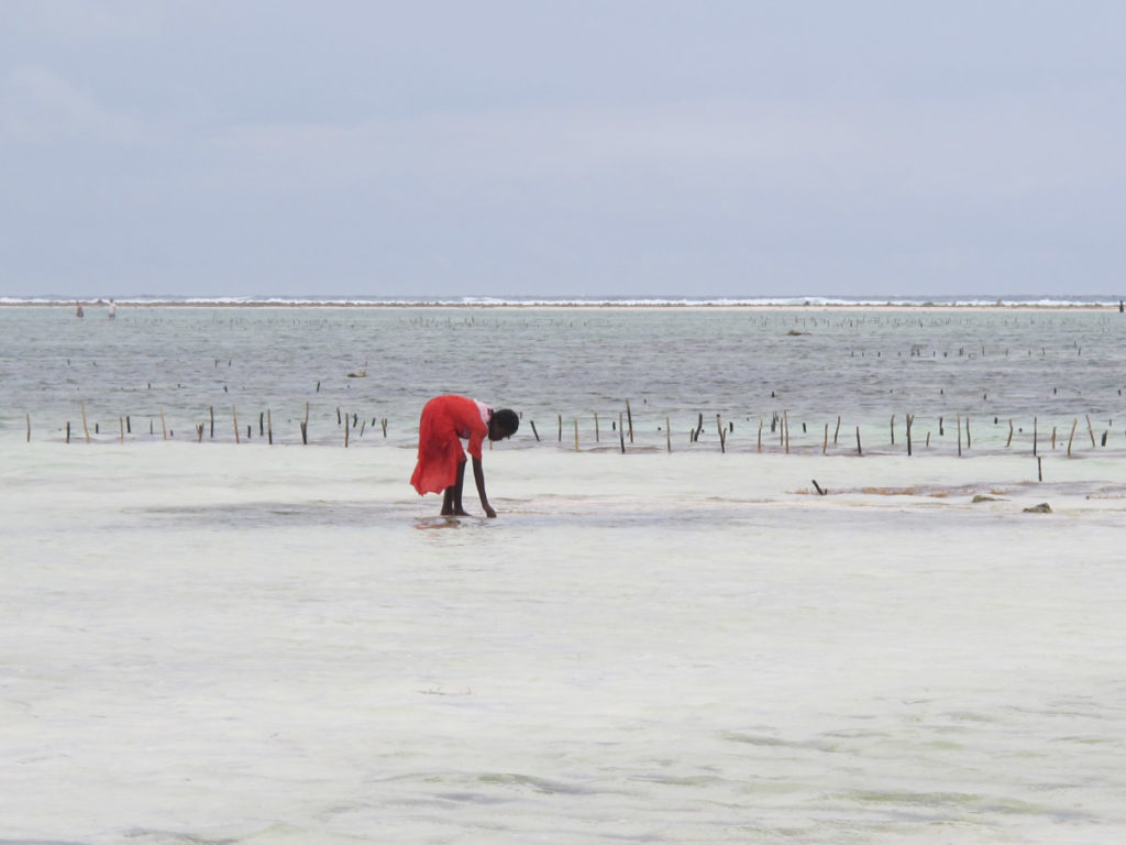 Rose Saltifolia 07 sand dunes seaside marine perfume 1200x900 - Maison Crivelli