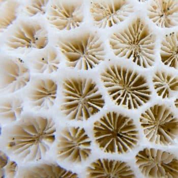 Rose Saltifolia 08 undersea woods corals 900x1200
