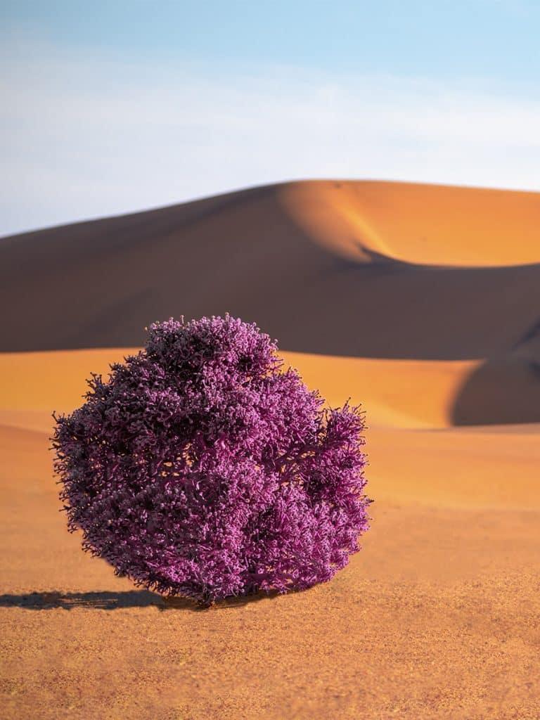 expériences incroyables arbre fleur désert surprise - Maison Crivelli