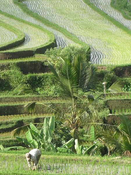 partnership commitment field Coeur de Forêt sustainability - Maison Crivelli