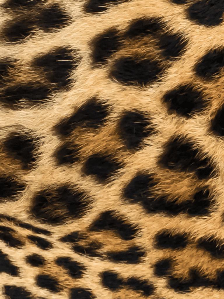 Iris Malikhân - 07 - mimosa animal - Maison Crivelli