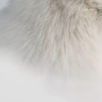 Absinthe Boréale 08 immaculate fur 1200x900-Maison Crivelli
